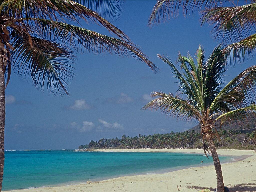 <~La plage~> Plage-feuillere2_g